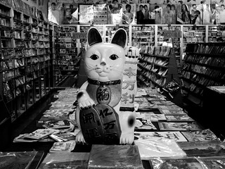 Cat in the bookstore | by Jinxin Ma