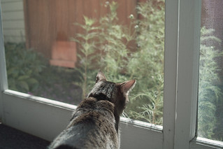"Another riveting episode of ""All My Squirrels"" 