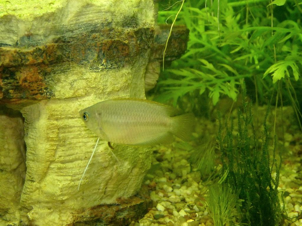 Aquarien Haustierbedarf Honig Aquarium