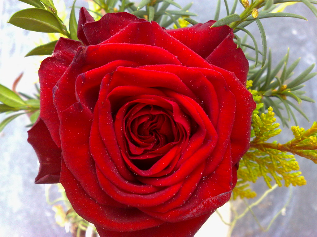 You Are So Beautiful Red Rose My Rose 3d Effect My D Flickr