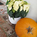 poinsettias and pumpkins