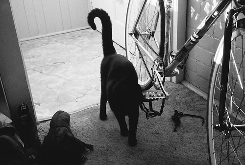 Cat + Bike | by andi-pandi