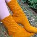 Life Cycle Socks