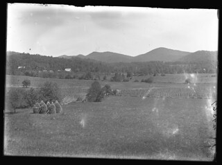 Field with trees with Rocky Mountains in background | by The Field Museum Library
