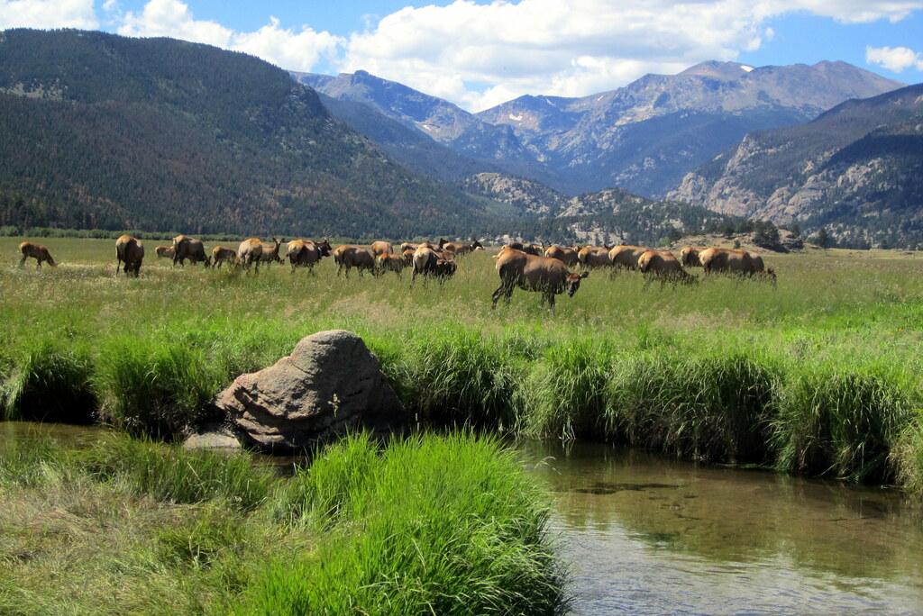 Colorado Rocky Mountain National Park Moraine Park El