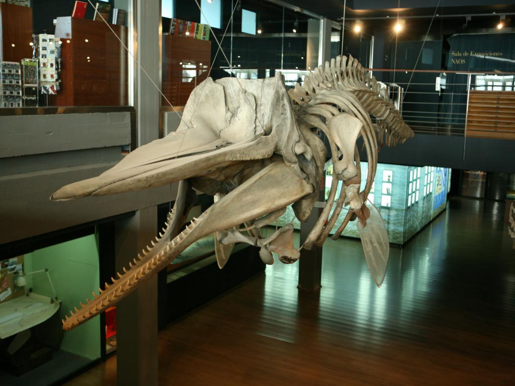 Whaling Museum In Long Island