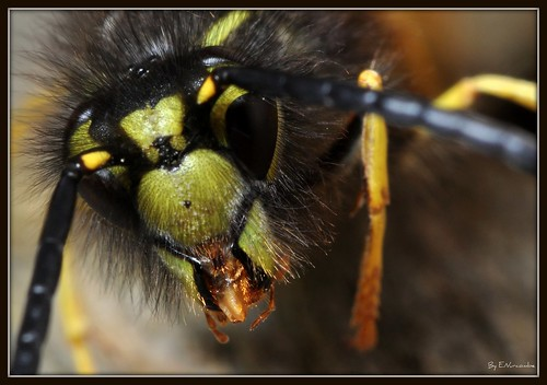 ~Open Wide~ | by Eddie The Bugman