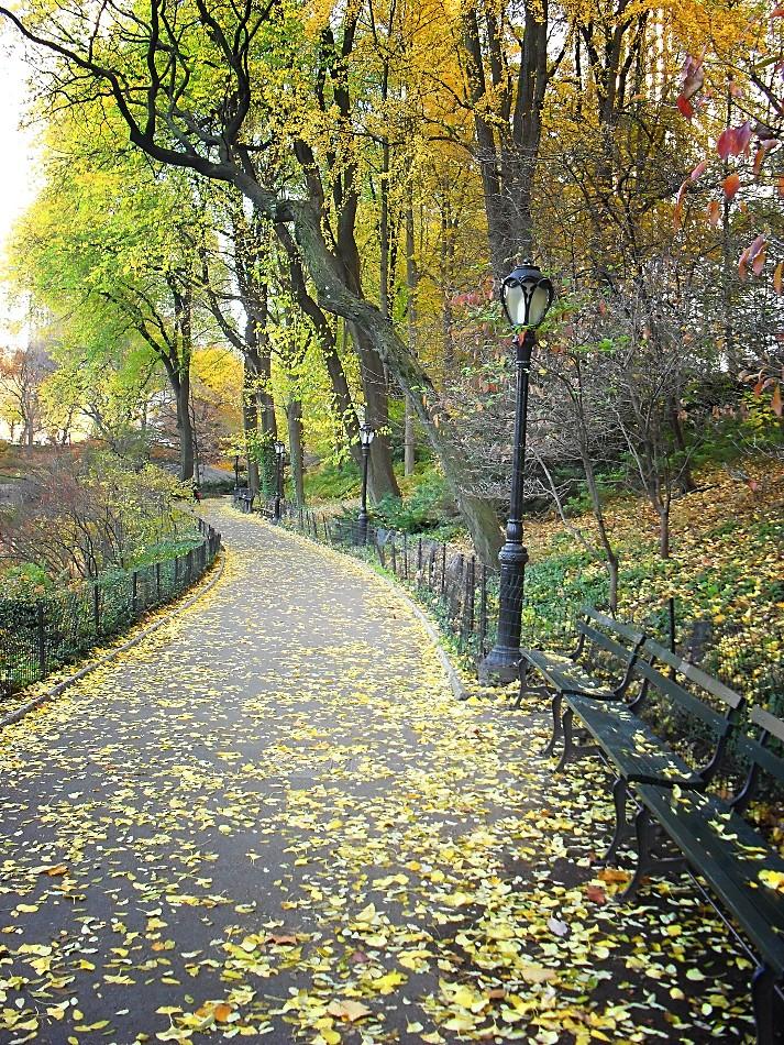 Central Park, New York City 529
