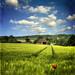 The Farm (naïve version)