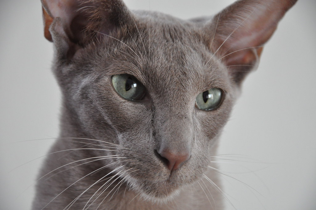 What To Name A Cat With Big Ears