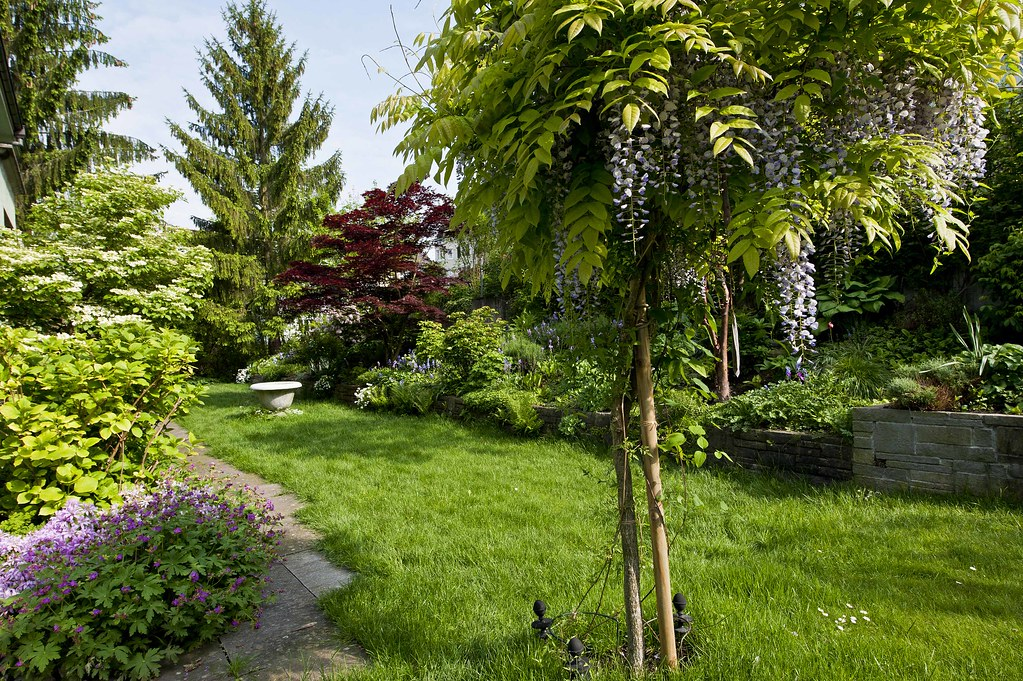 our wisteria tree to keep up interest after the wisteria. Black Bedroom Furniture Sets. Home Design Ideas