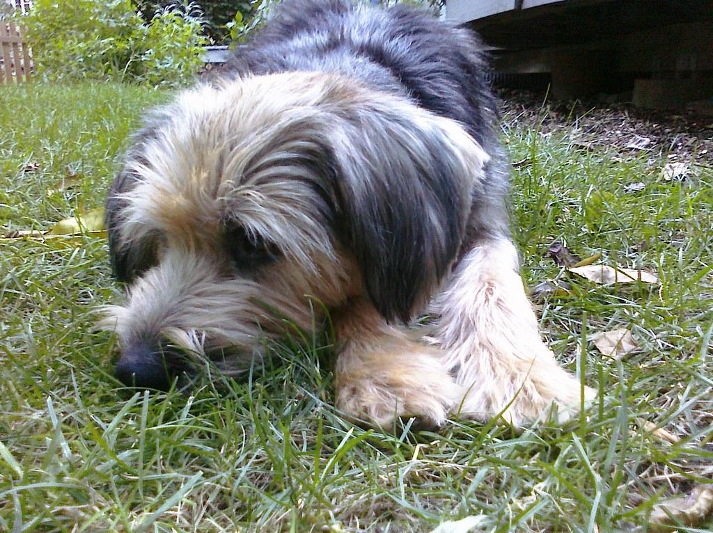 A Doggie Day Spa Valdosta Ga