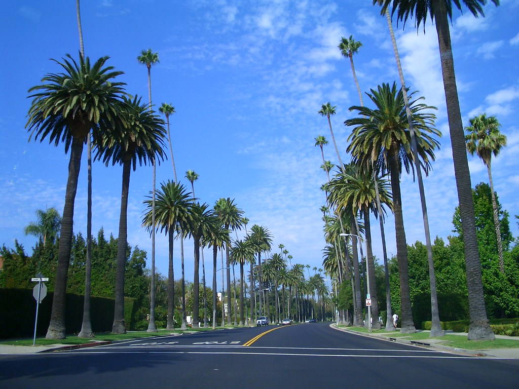 Palm tree lined streets in beverly hills palm tree lined for Southern living login