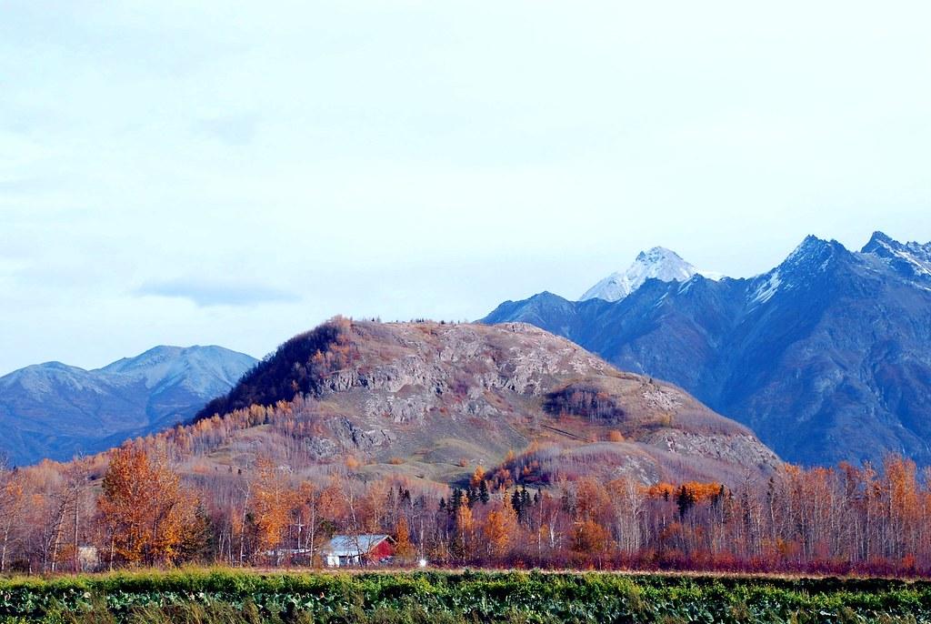Pyrah S Pioneer Peak Farm Butte Alaska Better View Www