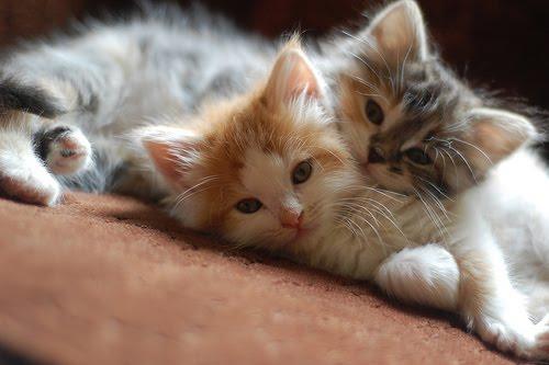 Mommy  Cats Yahoo Com