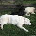 Daisy, Bear, and Franny 2