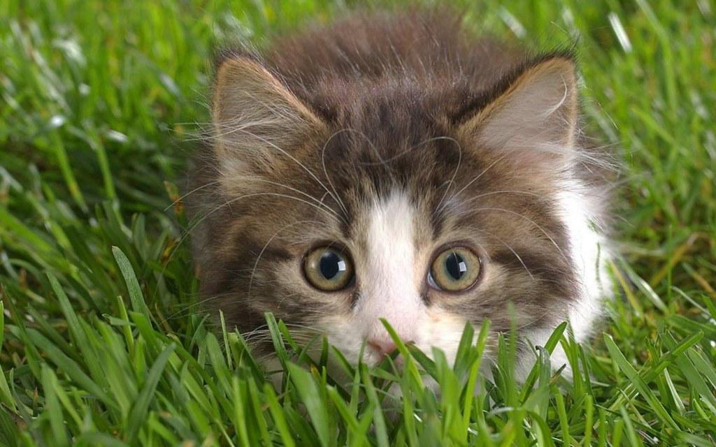 stalking kitten