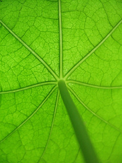GrapeLeaf | by The Coyote
