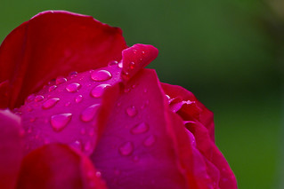 Raindrops on roses...you know the rest | by Roland Bogush