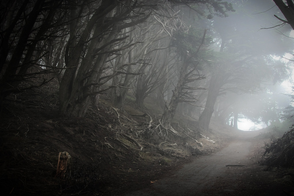 Spooky Woods - High Point, NC