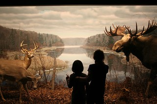 Museum of Natural History, Halifax, NS | by Avard Woolaver