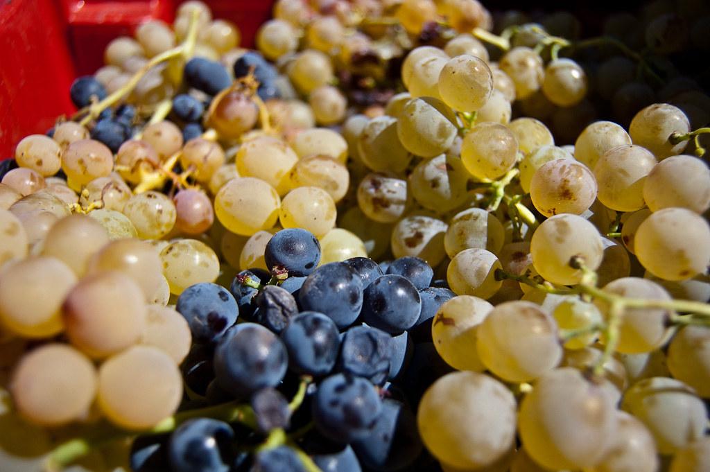 Resultado de imagen de uva