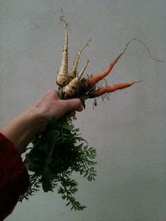 Final crop of the season: parsnips & carrots | by Toastwife