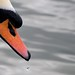 Droplets on a Swan