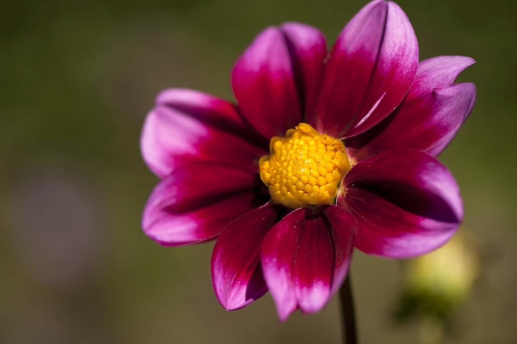 Высококачественное цветы