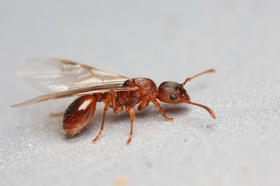 Image Result For Termites In Garden