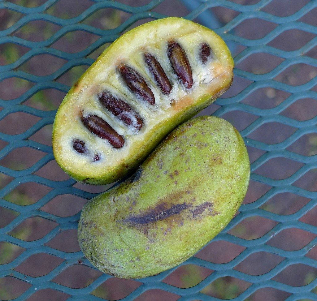 pawpaw fruit asimina triloba bill flickr. Black Bedroom Furniture Sets. Home Design Ideas