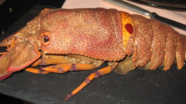 Cigale de mer- slipper lobster | Josee | Flickr