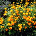 New York. Brooklyn Botanic Garden