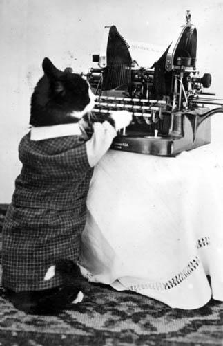Cat Typewriter Gif