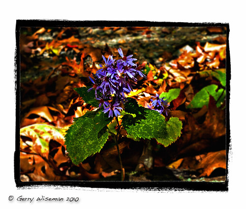 Autumn Flower | by Gerwise
