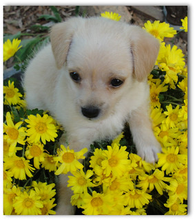 My new litttle puppy Miss Molly !!! | by ruthalice43