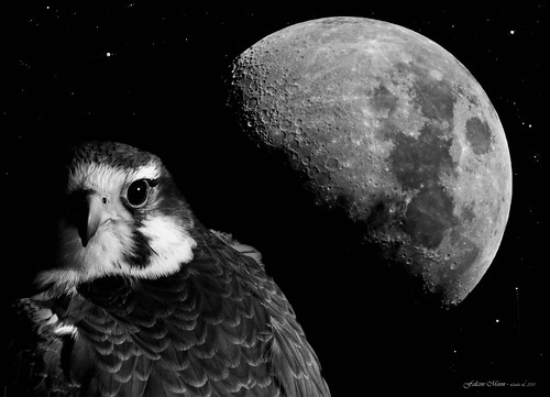 Falcon Moon | by linlaw39