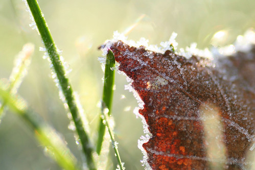 Frost | by Chickadee (Carole)