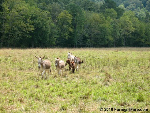 On the Trail of Treats Version 2 (1) | by Farmgirl Susan
