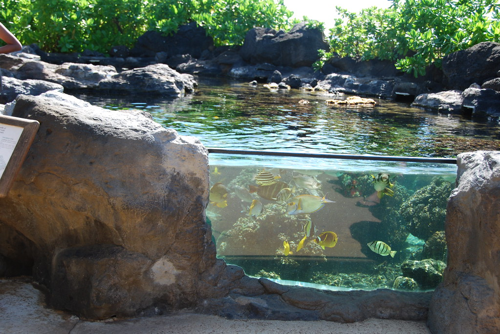 Outdoor fish tank waikiki aquarium flynariel flickr for Outside fish tank