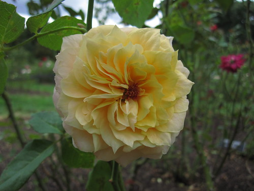 Beryl Bach | by Brooklyn Botanic Garden