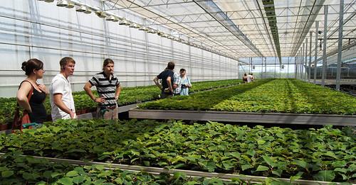 Poinsettias en viveros cantallops hace unos meses me for Organizacion de viveros