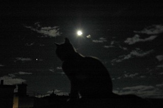 The cat, the moon, the star and the clouds | by eloisavh