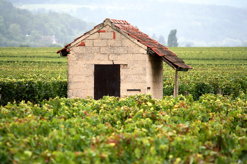 Burgundy, France | by Megan Lawrie Cole