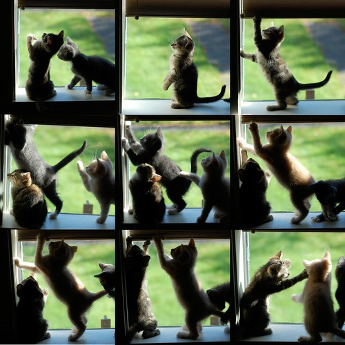 Window_Kittens | by *lalalaurie
