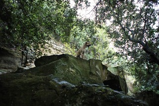 Cumae hound of the Sibyl surmounting the Sibylline cave. The dog led me to the caves, barking and snuffling at its entrance and howling above it | by Ahala