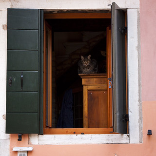 it needn't be straight to love a cat or ordinary pleasures | by barbera*