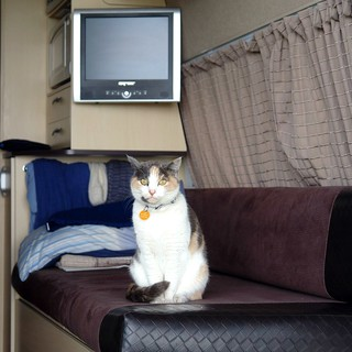 Greetings to all Flickr friends from New Zealand . Cat Orewa from the Caravan Park visit our camper! | by Uhlenhorst