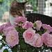 yummie roses
