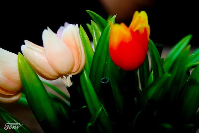 Flores de pl stico plastic flower flickr photo sharing - Flores de plastico ...
